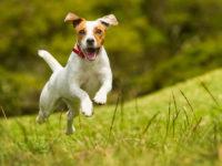 Ausflüge mit Hunden